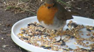 Sidney The Friendly Robin! Episode 2