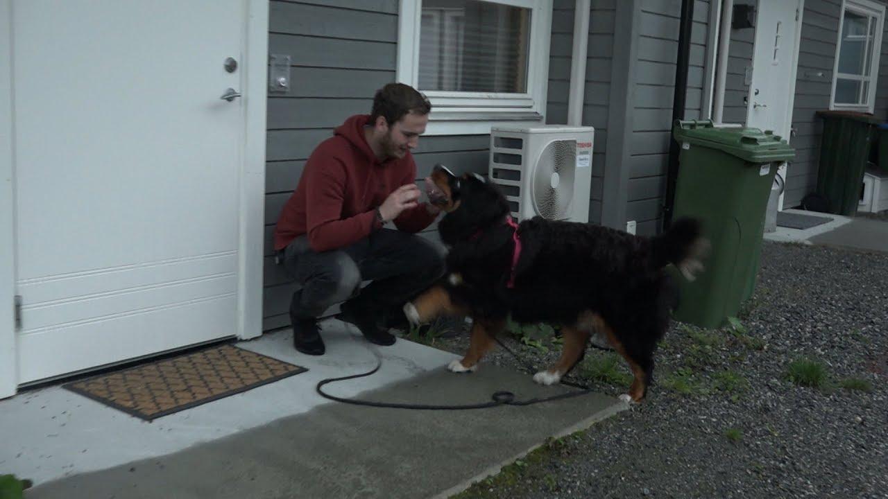 Hundesykdom