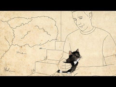 Ternura: Este soldado e este gato salvaram um ao outro
