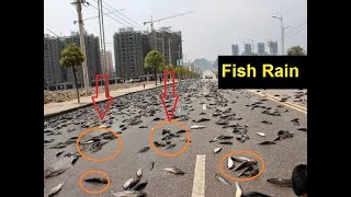 Shoking The fish rain in Thailand