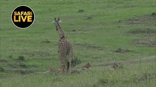 safariLIVE - Sunset Safari - January 15, 2019