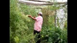 preview picture of video 'Baltasar Brum - Desarrollo Local'