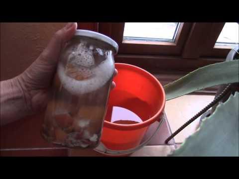 Яичная скорлупа   удобрение для растений.  Как сделать раствор?