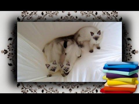 DIY 😻 Tisch Hängematte aus Spannbettlaken für Katzen | hammock for cats