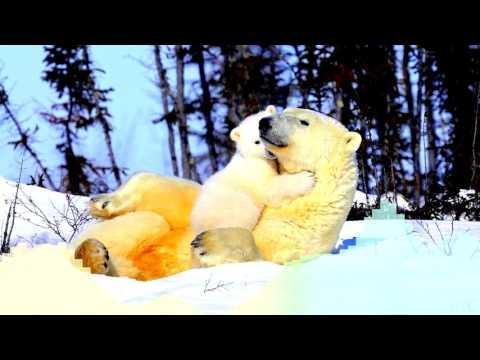 Марсель -  Здравствуй, Мам! (DJ Tarantino & DJ Dyxanin Remix) / Pop / MP3