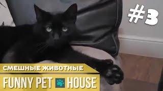 СМЕШНЫЕ ЖИВОТНЫЕ И ПИТОМЦЫ #3 СЕНТЯБРЬ 2018 [Funny Pet House] Смешные животные