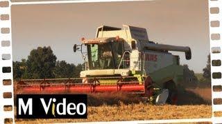 Claas Lexion 450 & 460 Bio Gerste dreschen - MVideo # 14