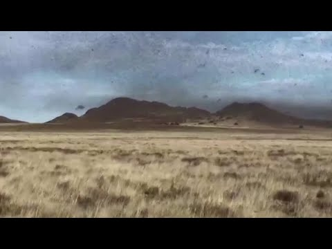 Locusts invade South African farms