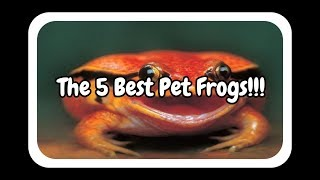 The 5 Best Pet Frogs