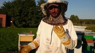 пчеловодство на практике лето 2018