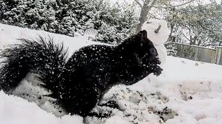 Let It Snow Squirrels- Night Time Video For Cats and Dogs - 10 Hours - They Watch While You Sleep!!