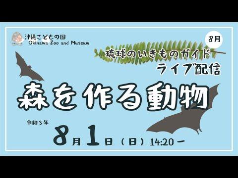 琉球のいきものガイド★ライブ配信【森を作る動物】Animal Guide-Creatures of Ryukyu Arc