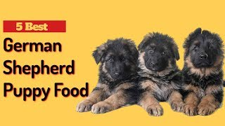 5 Best Dog Food for German Shepherd Puppy | German Shepherd Puppy Food.
