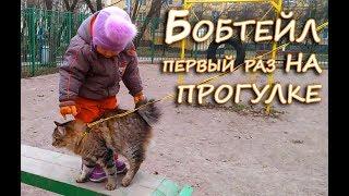 Кот бобтейл первый раз идёт на прогулку