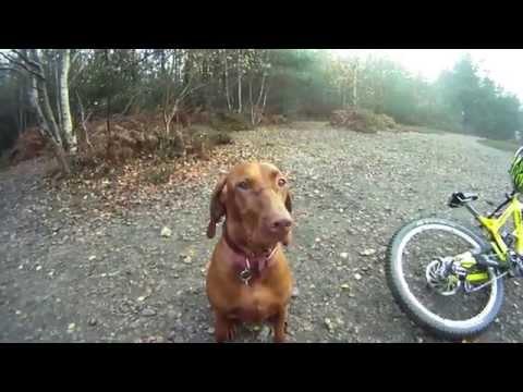 Downhill Mountain Biking with a Dog!