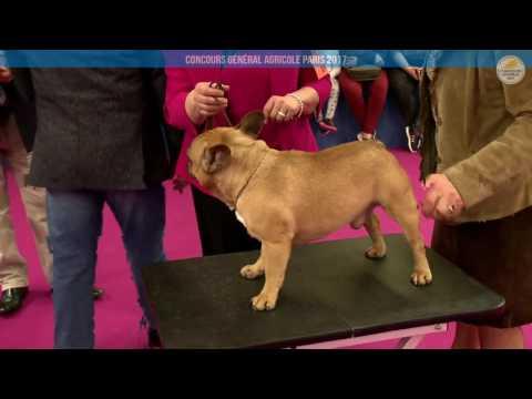 Voir la vidéo : Ring Canins du 26 février 2017, après midi