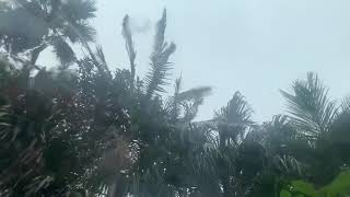 Tropical Rain Sounds on a Car | White Noise Rainstorm for Sleeping, Relaxing, Stress Relief, Study
