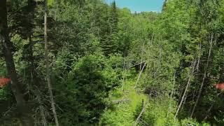 DJI FPV Drone Forest Fly Through (Proximity Flight)