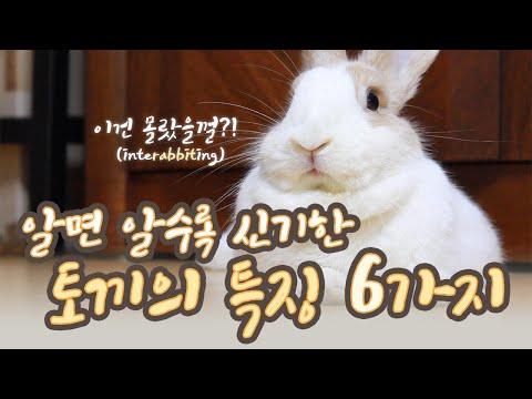 , title : '초보 토끼 키우기 (*ꆤ.̫ꆤ*) 알면 알수록 신기한 토끼의 특징 6가지! 일반인들은 잘 모르는 토끼의 비밀! 토끼 먹이, 토끼 이갈이, 토끼 발바닥, 토끼 발톱, 토끼 헤어볼 등'