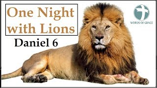 One Night With Lions