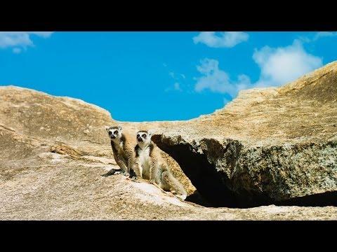 Island of Lemurs: Madagascar Trailer