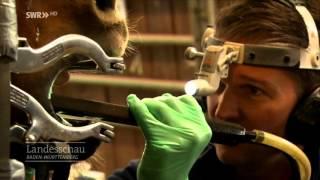 Auch Pferde Müssen Zum Zahnarzt