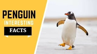 Penguin Facts For kids -  Habitat,  Dite, species All Information & Much More!
