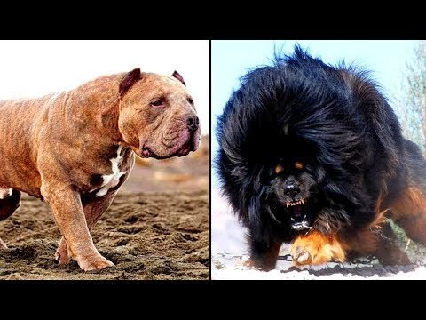 14 MORE of the Worlds Most Dangerous Dog Breeds