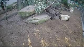 Meerkats – Taronga Zoo Sydney