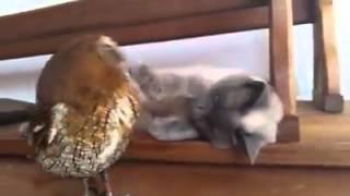 Знакомьтесь, кошка Клео и совёнок Форби!