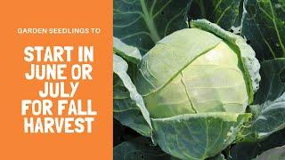 Seedlings to Start in June or July for Fall Harvest