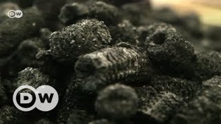 Protecting forests with maize briquettes | DW English
