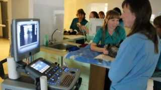 Ветеринарная клиника Ветдоктор - УЗИ