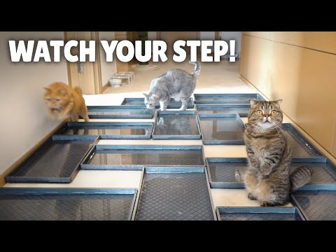 Can These Cats Overcome This Water Minefield Obstacle?