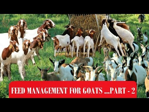 Feed Management  For Goats Part - 2 | Ashwin Sawant