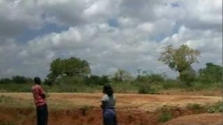 The African Baobab Tree Revealed - Adansonia Digitata