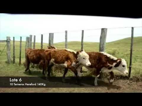 Lote 10 Terneros Hereford 140kg -  en Establecimiento las Delicias - Paraje la Bolsa, ruta 30 km 176. entra al sur 8 km.