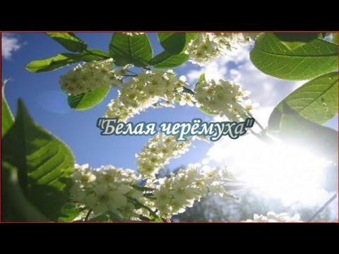 """""""Белая черёмуха"""" Песня из к/ф """"Цвет черёмухи""""  - Вольница Лиепая Латвия"""