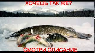 На севере рыбалка форум 2015