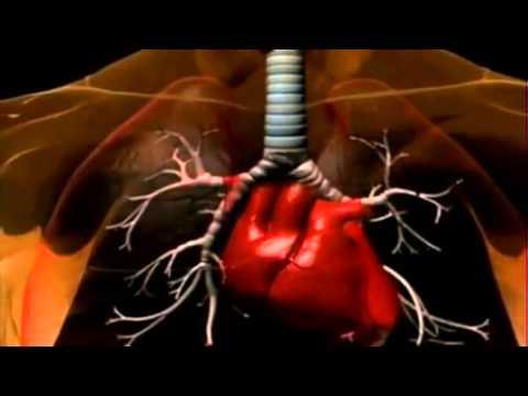 Hausse des symptômes de sucre dans le sang