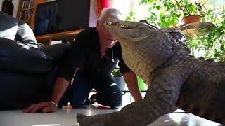 Người đàn ông ngủ cùng cá sấu, bò sát