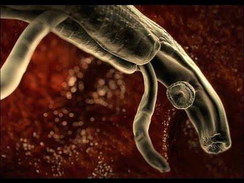 Польза простейших паразитов