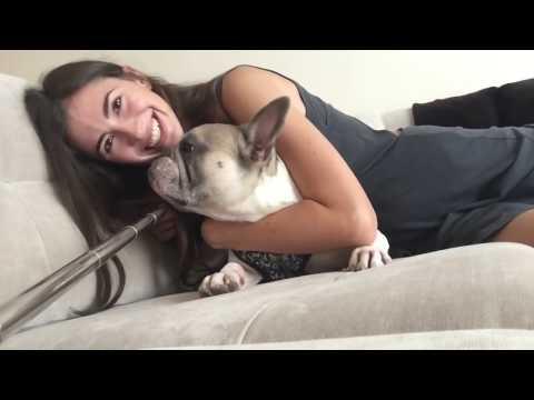 ЖИВОТНЫЕ В США: как привезти, НАЛОГ на домашних животных