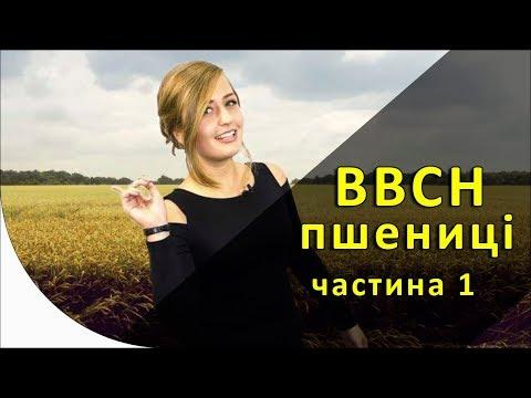 ВВСН пшеницы (часть первая)