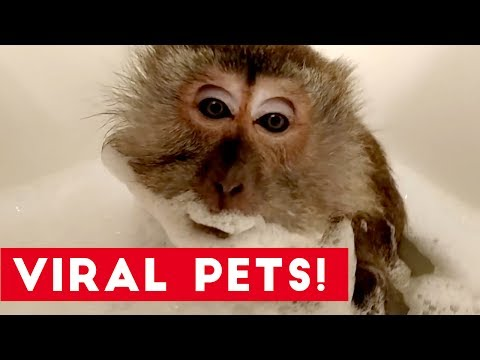 Try Not to Laugh at These Funny Viral Animals of 2017 | Funny Pet Videos