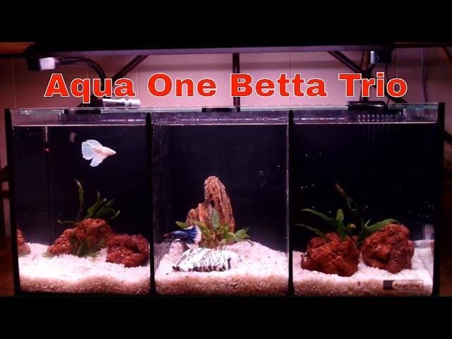 Aqua One Betta Trio Tank Set Up