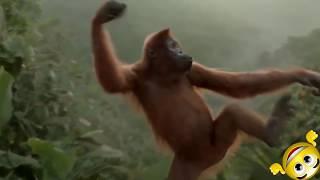 Зомб - Делаем флекс ( животные танцуют(ЖГУТ))