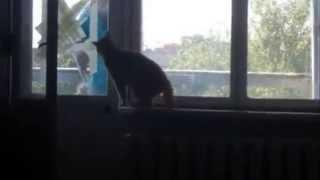 Кот атакует, Жесть!
