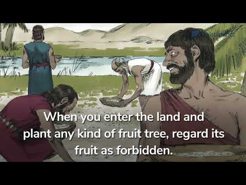Leviticus 19: Various Laws | Bible Stories
