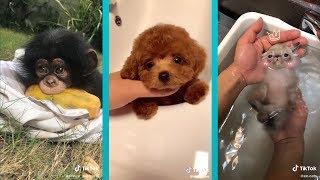 The Cutest Animals on Tik Tok! Amazing Pet Tricks + Exotic Creatures